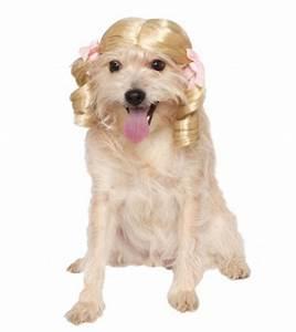 32 cute easy halloween costume ideas dogs t