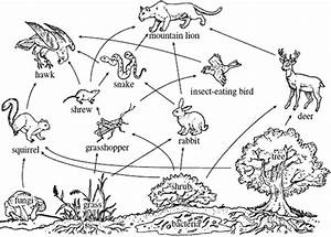 Mildred Patricia Baena  Food Web Diagram