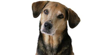 dog quizzes trivia questions answers proprofs quizzes