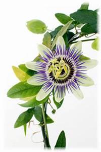 Flower Benefits