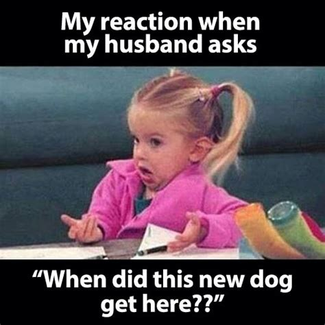 Married Meme - lexi michelle blog the reality of marriage in memes