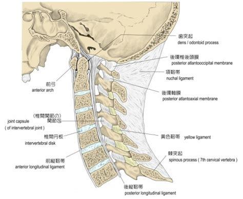 頸椎ヘルニア に対する画像結果