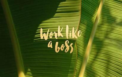 Boss Desktop Leysa Flores Background Wallpapersafari Wallpapers
