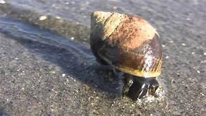 Sea snails - YouTube