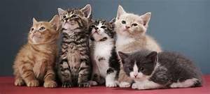 13 Cute cats wi... Cute Cats
