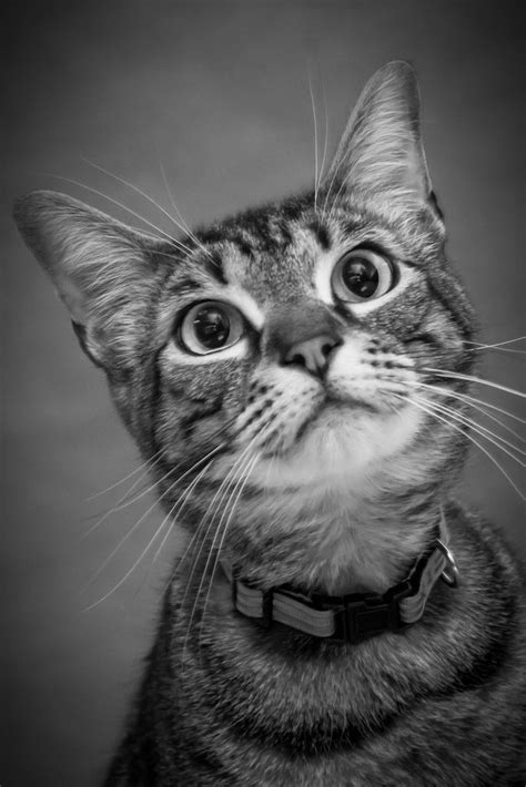 7 Best My Own Pet Photography Images On Pinterest Pet