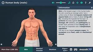 Human Body  Male  For Android