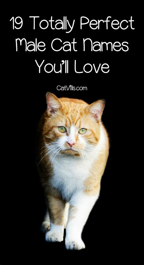 cats names best 25 names for male cats ideas on pinterest cat names for boys boy cat names and boy