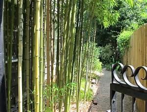 Bambou Pour Haie Brise Vue : plantes de jardin le bambou fascinant et polyvalent ~ Premium-room.com Idées de Décoration