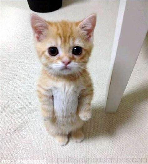 chat poil blanc photos de nos animaux