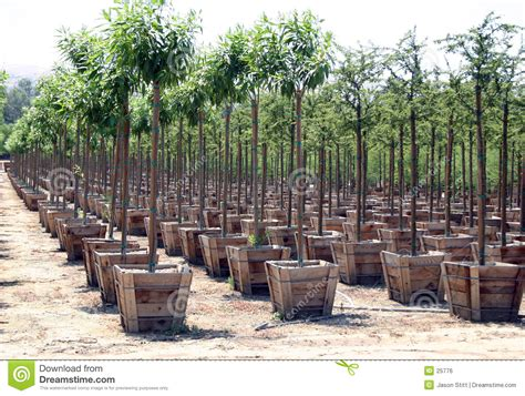 tree nurseries nursery stock photo image of growing grow gardening nurserys 25776
