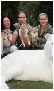 White lion and white tiger had babies together and they're ...