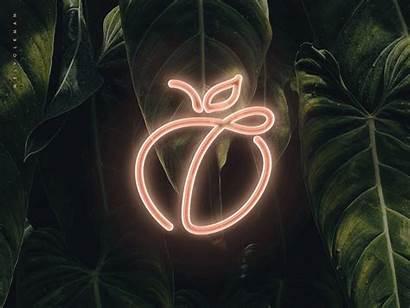 Peach Neon Sign Tropical Volkman Mel Dribbble