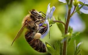 Se Débarrasser Des Guepes : se d barrasser des abeilles bordeaux destruction nid abeille ~ Melissatoandfro.com Idées de Décoration