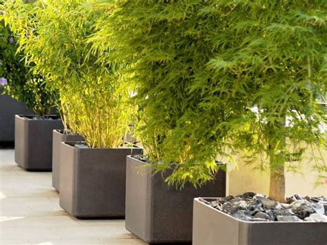 planting trees in large flower pots front yard landscaping ideas