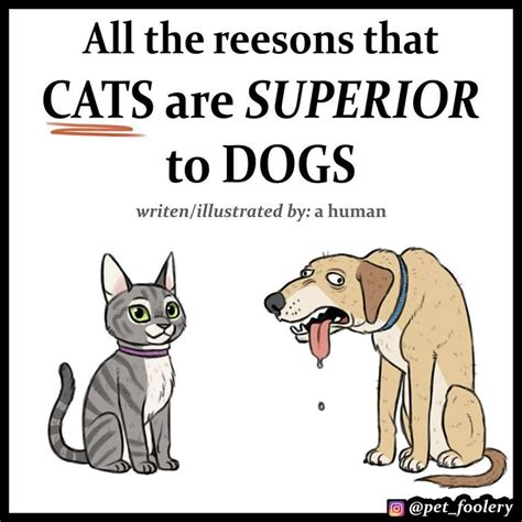 cats dogs better than why comics funny cat then hilarious explaining reasons superior comic argument pet foolery fact decided panda