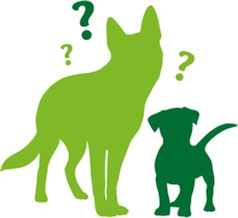 bindehautentzuendung beim hund symptome behandlung