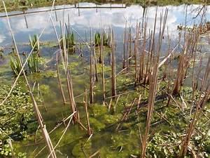 Algen Im Teich Entfernen : algen im gartenteich klares wasser im gartenteich algen keine chance geben with algen im ~ Orissabook.com Haus und Dekorationen
