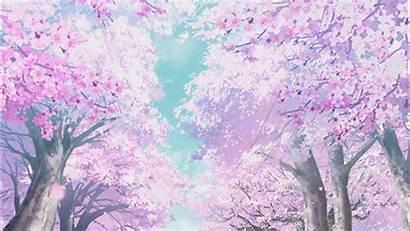Cherry Anime Blossom Aesthetic Animated Scenery Lovers