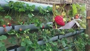Heidelbeeren Pflanzen Zeitpunkt : die 25 besten ideen zu erdbeeren pflanzen auf pinterest die pest kleine pick ups und ~ Orissabook.com Haus und Dekorationen