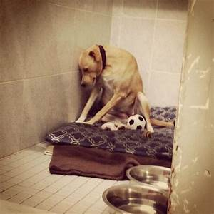 Dog Returned To Rescue So Depressed She Refuses To Leave ...