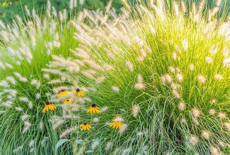 Gräser Bepflanzung Im Garten