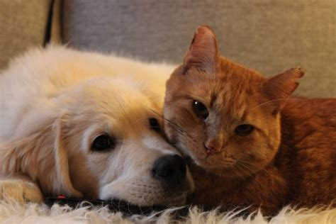 Cat And Dog Cat And Dog Prove That Best Friends Happen Anywhere Any Time