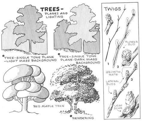 draw trees bark twigs leaves  foliage drawing