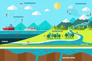 Everything You Need To Know About The Water Cycle And