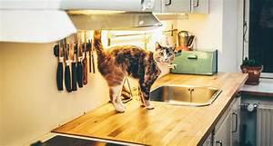 Comment Enlever Les Oeufs De Puces Sur Un Chat : comment se d barrasser des puces de mon chat dans ma maison ~ Dode.kayakingforconservation.com Idées de Décoration