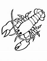 Lobster Coloring Sea Animals Pages Crayfish Outline Printable Drawing Cute Giant Clasp Animal Cartoon Clipart Ocean Print Crawfish Creatures Silhouette sketch template