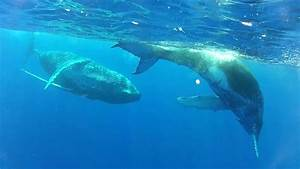 Baby Blue Whale | www.pixshark.com - Images Galleries With ...