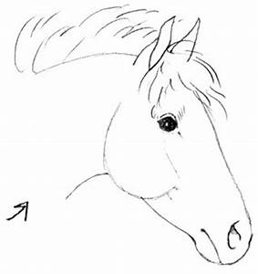 Tekenen: How to draw the head of a horse