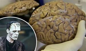 Researchers Grow Frankenstein  U0026 39 Mini Brains U0026 39  In Lab For First Time