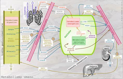 alimentazione ortomolecolare nutriterapia ortomolecolare alimentazione dieta