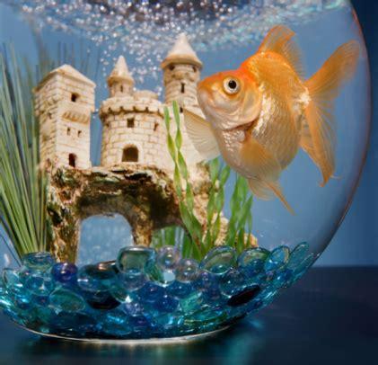 bien entretenir aquarium 28 images 28 images bien entretenir aquarium 28 images children s