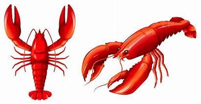 Lobster Vector Clip Crawfish Illustration Graphics Seafood