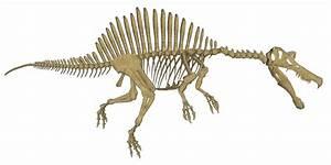 Spinosaurus Tooth - wowkeyword.com
