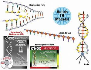 Biology/Life Science - K'Nex DNA Replication ...