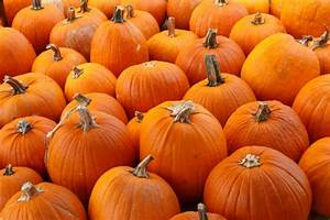 Orange Pumpkins Background Free Stock Photo