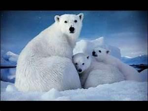 Ecocide-- Mass Species Extinction: Arctic #1-- RED ALERT ...
