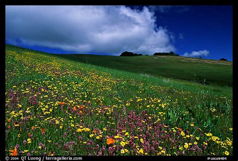 Wildflowers In The Spring, Russian Ridge