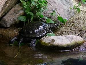 Tiere Für Aquarium : aquarium fische tiere m ritzeum fischfotos ~ Lizthompson.info Haus und Dekorationen