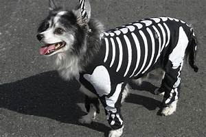 top 5 adorable pet costumes this year 39 s