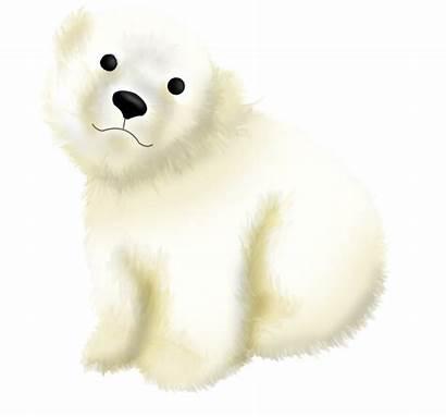 Bear Polar Marine Mammal Animal Transparent Figure