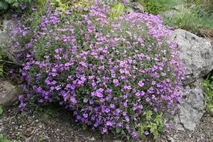 Pflanzen Für Steingarten : steingarten planen anlegen und tipps mein sch ner garten ~ Michelbontemps.com Haus und Dekorationen