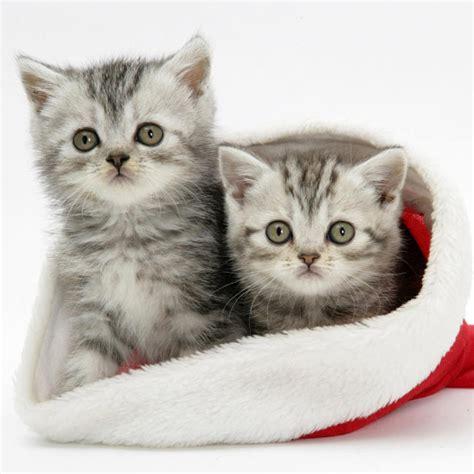 Ipad Wallpapers Free Download Christmas Pets Ipad