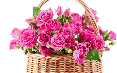 bouquet pink beautiful flowers roses wallpaper