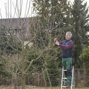 Apfelbaum Schneiden Wann : apfelbaum schneiden tipps f r jede baumgr e garten apfelb ume schneiden apfelbaum und ~ Watch28wear.com Haus und Dekorationen