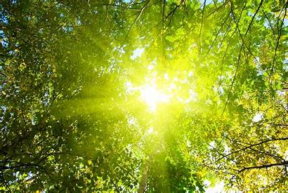 Forest Sun Wallpapers Sunshine Trees Through Shine